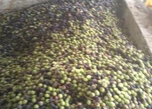 """منتجو الزيتون الأسود: ثمارنا سليمة ومصانع """"بير السلم"""" تلمعها بالورنيش"""