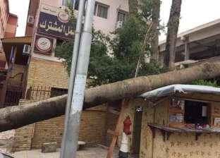بالصور| سقوط أشجار في دمياط بسبب سوء الطقس