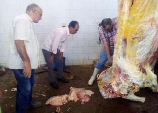 """إعدام بقرة مصابة بـ""""السل"""" في حملة لضبط أسواق اللحوم قبل العيد بملوي"""