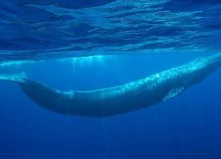 خبير إلكتروني: لعبة الحوت الأزرق مغلقة منذ نوفمبر 2016