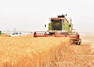بريد الوطن| الحبوب بين زراعتها واستيرادها من الخارج
