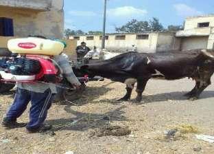 «الجلد العقدى» يهاجم الماشية بالمحافظات و«الطب البيطرى» يعلن حالة الطوارئ