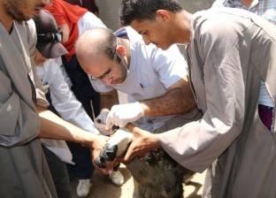 بالصور| 5 قوافل طبية لجامعة أسيوط لعلاج المواشي