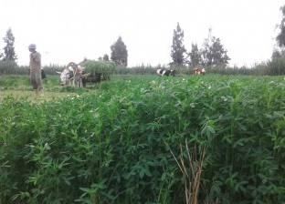 بدء زراعة 138 ألف فدان من المحاصيل الشتوية في كفر الشيخ