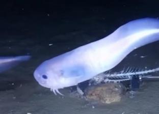 بالفيديو  اكتشاف أسماك عجيبة تذوب خارج الماء
