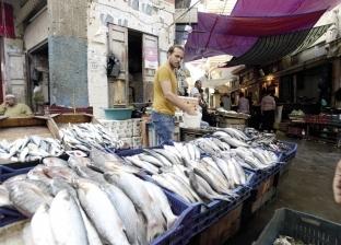 عضو نقابة الأطباء البيطريين: لا بديل عن إنشاء «الاتحاد العام لمنتجى الأسماك»