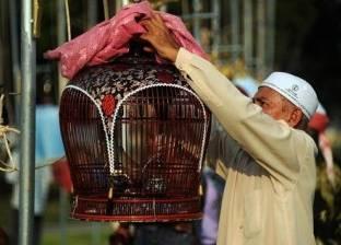 بالصور| مسابقة غنائية لآلاف العصافير في تايلاند