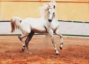 «محطة الزهراء».. هنا نفق أجمل حصان فى العالم