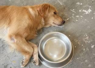 بالصور| جريمة بشعة.. رجل يحرق كلبا على قيد الحياة ويتناول لحمه