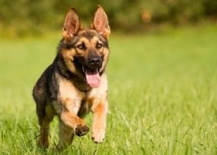 """بعد واقعة """"كلاب الدقي"""".. تعرف على الإسعافات الأولية لإنقاذ كلب مصاب"""