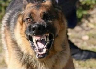 تقرير رسمي: المنوفية تسجل 29 ألف حالة عقر من الكلاب الضالة في 10 أشهر
