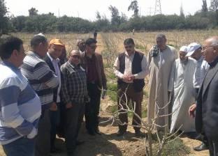الإرشاد الزراعي بالبحيرة ينظم زيارة لمحاصيل المستقبل في برج العرب