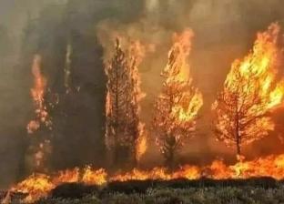 الدفع بـ200 سيارة إطفاء.. القصة الكاملة لحرائق لبنان