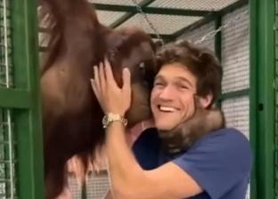 تقلبات القرود في أسبوع.. من قبلة لاعب تشيلسي لمهاجمة مدرسة فتيات