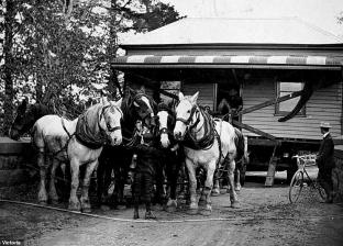 بالصور| خيول تجر منازل كاملة بسبب الكوارث الطبيعية