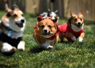 دراسة: أفعال الكلاب قد تساعد في أبحاث المستقبل
