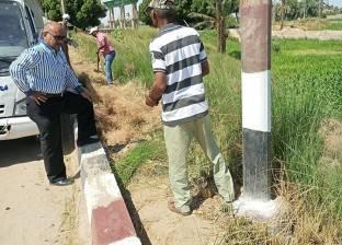 """زراعة 100 شجرة على طريق """"مصر - أسوان"""" الزراعي"""