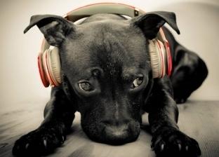 موسيقى هادئة.. خدمة جديدة لتسلية الكلاب خلال غياب أصحابها