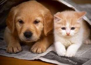 تعديل تشريعى لتربية الكلاب والحيوانات فى المنازل.. وعقوبات مضاعفة لإيذاء الآخرين