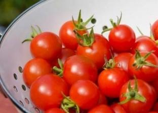 قبل زراعة الطماطم.. 10 نصائح للتعامل مع العروة الصيفية