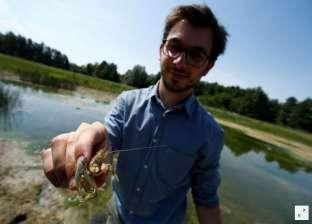 """""""جراد البحر"""" يهدد المياه العذبة في ألمانيا"""