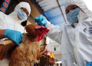 إجراءات وقائية شديدة بعد الاشتباه في بؤرتين لانفلونزا الطيور بقنا