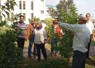 """غرس أشجار مثمرة بديوان """"تعليم الإسكندرية"""" و3 مدارس"""