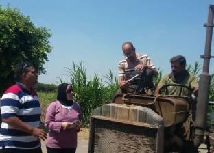 """الانتهاء من حصاد """"الأرز"""" وزراعة """"الكتان"""" بحقول كفر الشيخ"""