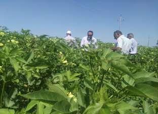 زراعة دمياط تتابع أعمال تطهير مصرف المشروع