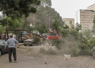 الطقس السئ يخلف 4 حوادث سقوط أشجار وأعمدة إنارة في الدقهلية