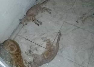 بالصور  بعد هجومها على المرضى.. تسميم قطط مستشفى الصدر بالسويس
