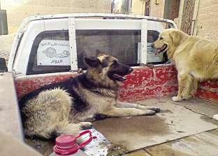 بلاغات على مواقع التواصل انتهت بـ«حرامى كلاب فى الشيخ زايد»