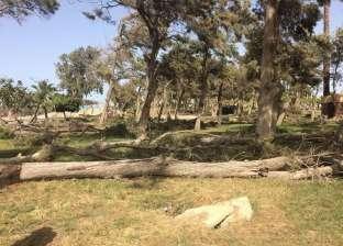 """طاحون: قطع أشجار حدائق المنتزة بالإسكندرية بسبب """"التسوس"""""""