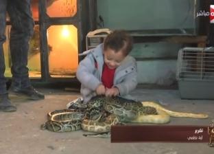 بالفيديو والصور| طرزان المصري.. طفل يلعب مع الثعابين والتماسيح