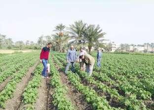 فيديو.. الزراعة: إقبال دولي على الصادرات المصرية