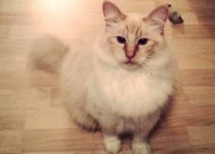 """قطة محبوسة سنة ونص وأهالى أسيوط بيأكّلوها من تحت """"عُقب الباب"""""""