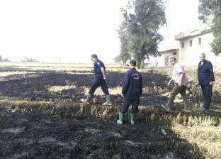 """""""البيئة"""": نتصدى لكل من يصر على الحرق المكشوف للمخلفات الزراعية"""