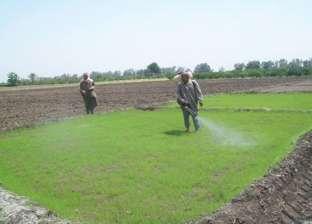 """""""الحاصلات الزراعية"""": المخزون الاستراتيجي للأرز يكفي حتى أكتوبر القادم"""