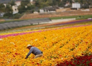 نقيب الزراعيين: خارطة طريق لتطوير الزراعة المستدامة