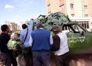 خضروات وفاكهة كلية الزراعة بجامعة القناة تطرح منتجاتها بالإسماعيلية