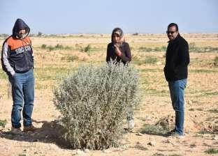 """""""أكساد"""" تنفذ مشروعا لحماية البنية التحتية في سيناء من الكثبان الرملية"""
