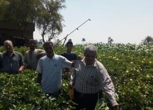"""""""القوى العاملة"""" تعلن شروط الحصول على عقد عمل بمجال الزراعة في الأردن"""