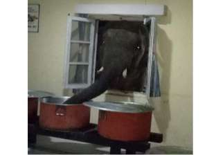 """فيل """"مدام نانسي"""" في حدائق الهرم يثير الجدل.. ما حقيقته؟"""