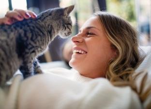منها محاربة الكآبة وأمراض القلب.. دراسة تكشف فوائد تربية القطط