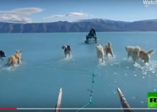 ذوبان الجليد.. مقطع فيديو لكلاب تجرى وسط المياه يثير قلقا واسعا
