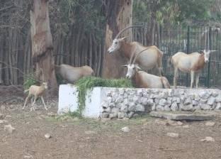 """""""الزراعة"""": برامج لإكثار الحيوانات والطيور المهددة بالانقراض"""