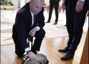 """بعد هدية رئيس صربيا.. """"بوتين"""" والكلاب قصة عشق"""
