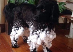 طرائف وعجائب الكلاب في 12 صورة: كلبي مستعد لأسبوع الموضة