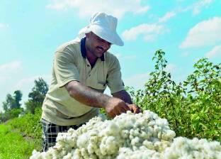 """""""الزراعة"""": 609 فدان منزرعة بالفول السوداني خلال الموسم الزراعي الصيفي"""