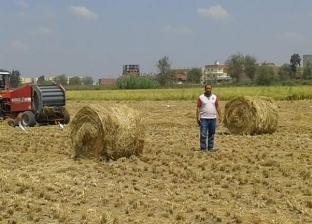 """""""بيئة الدقهلية"""": جمع 76 ألف طن قش أرز"""
